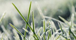 Gazon-winterklaar-maken